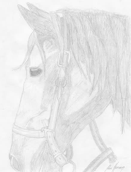 Re: Dibujos de caballos